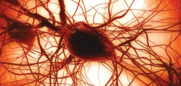 ما هي وظيفة صفائح الدم do.php?img=49846
