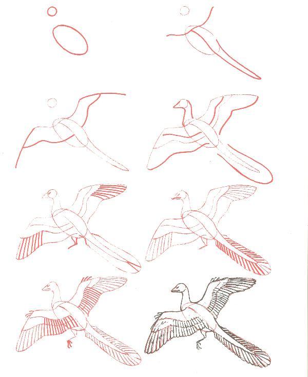 الرسم بخطوات بسيطة وسهلة 2 13308545221.jpg