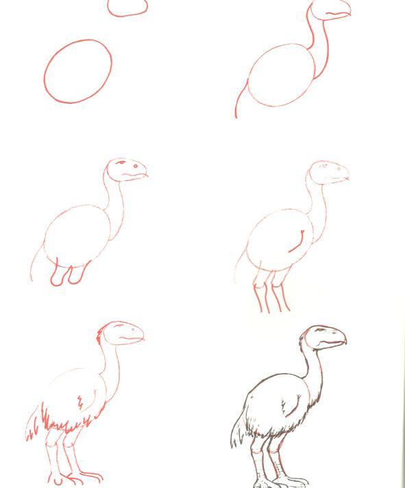 الرسم بخطوات بسيطة وسهلة 2 13308551321.jpg