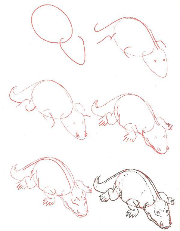 الرسم بخطوات بسيطة وسهلة 2 13308554591.jpg