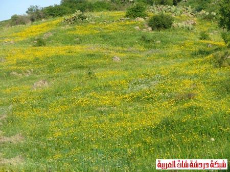 صور من هضبة الجولان ربيع 2012 13399385035.jpg