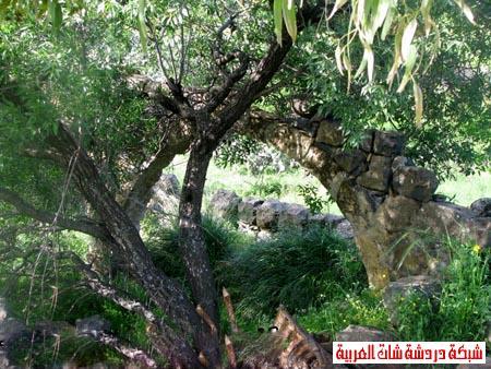 صور من هضبة الجولان ربيع 2012 13399385036.jpg