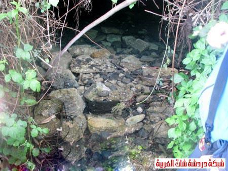 صور من هضبة الجولان ربيع 2012 13399388702.jpg