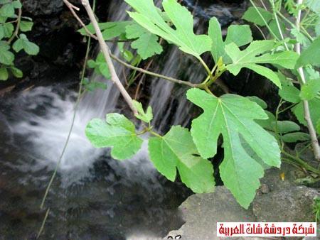 صور من هضبة الجولان ربيع 2012 13399388704.jpg