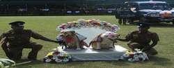 شرطة سريلانكا تنظم زفافا جماعيا للكلاب 13778202631.jpg