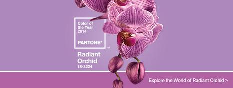 اللون الذي تم اختياره لعام 2014 لون نبات السلحب 1386598702352.jpg