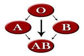 الغذاء المناسب لكل فصائل الدم المختلفة 1387978314461.jpg