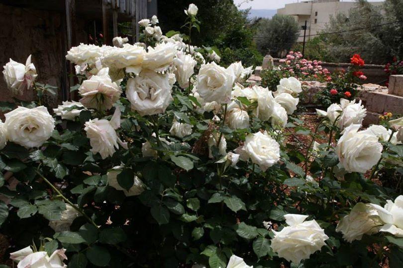 احلى الزهور من اغلى الاماكن ...... 1392248697281.jpg