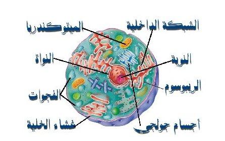 الخلية 1392489626321.jpg