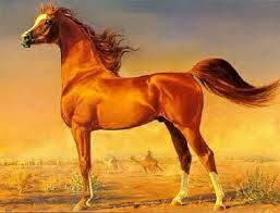 معلومات وصور عن الحصان 1392855439941.jpg
