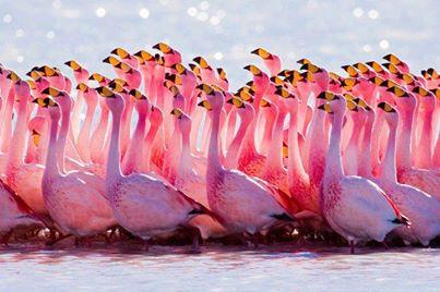 صورة خلابة للنعام الوردي الافريقي:- 1392856106931.jpg