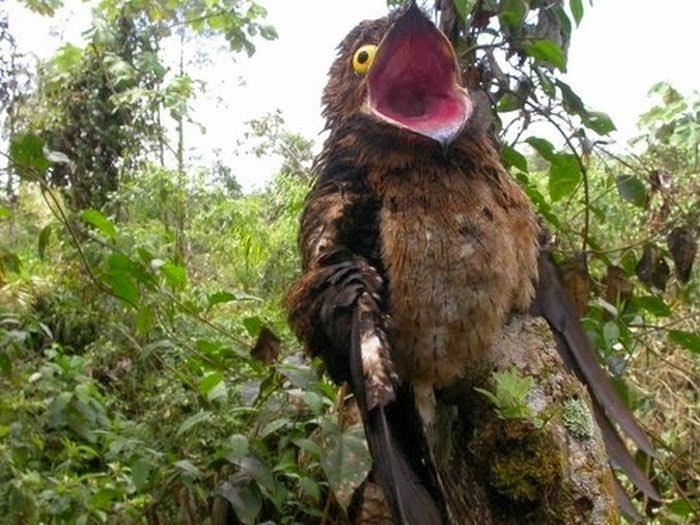 اكثر الطيور المعبرة في المملكة الحيوانية 1393524540621.jpg