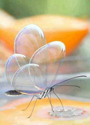 الفراشة الشفافة 1393685002051.jpg