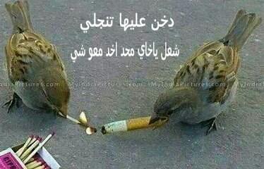 للمدخنين فقط 1395388951541.jpg