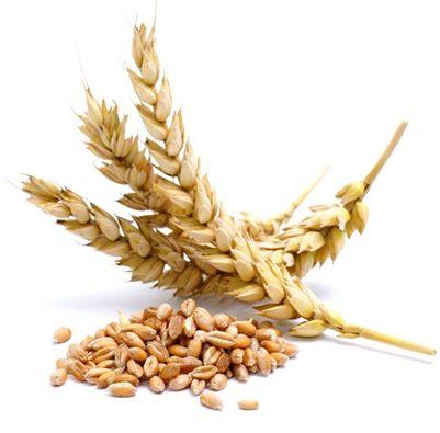 ماهي اعراض سوء الامتصاص..حساسية القمح؟؟ 1395914135641.jpg
