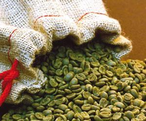 هل القهوة الغير محمصة تعمل على تخفيض نسبة السكر في الدم؟؟ 1395915301231.jpg
