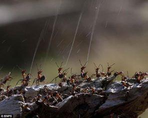 كيف يدافع النمل عن نفسه من الحشرات والطيور المفترسة 1396538367911.jpg