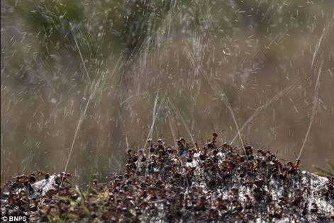كيف يدافع النمل عن نفسه من الحشرات والطيور المفترسة 1396538747491.jpg
