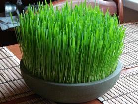جرعة عشبة القمح للحامل 1396722153741.jpg