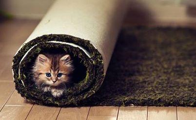 ما رأي الدكتور بتربية القطط في البيت؟ 139679305341.jpg
