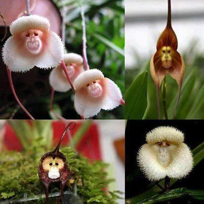 اندر انواع الزهور وتسمى بزهره القرد 1397784373291.jpg