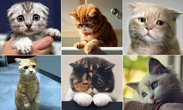بالصور قطط حزينة 1397953842171.jpg