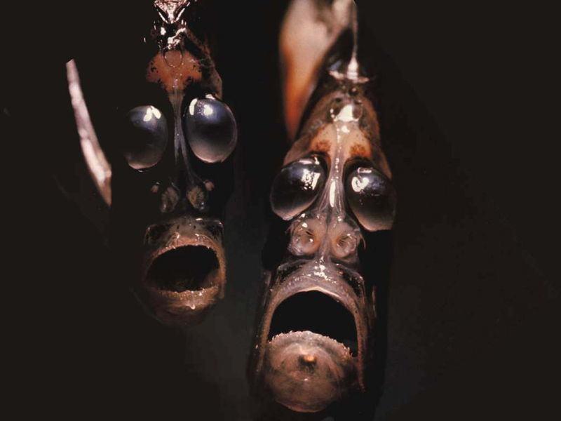 أغرب 7 مخلوقات مخيفة في قاع المحيط 1398332239241.jpg
