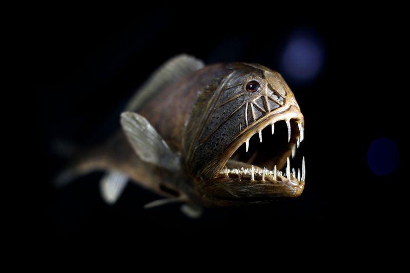 أغرب 7 مخلوقات مخيفة في قاع المحيط 1398334156281.jpg