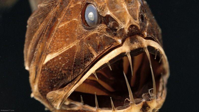 أغرب 7 مخلوقات مخيفة في قاع المحيط 139833426081.jpg