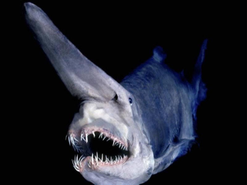 أغرب 7 مخلوقات مخيفة في قاع المحيط 1398334645341.jpg