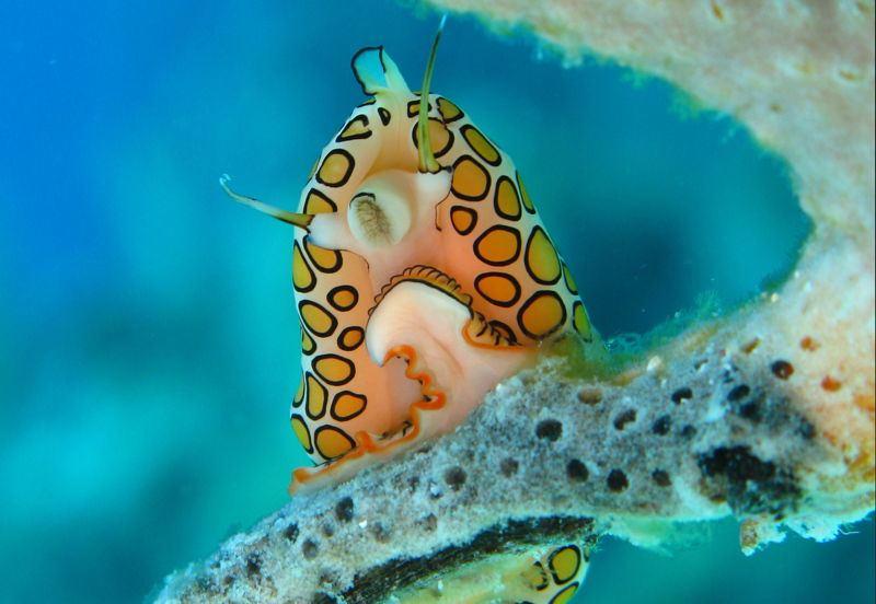 أغرب 7 مخلوقات مخيفة في قاع المحيط 1398335316491.jpg