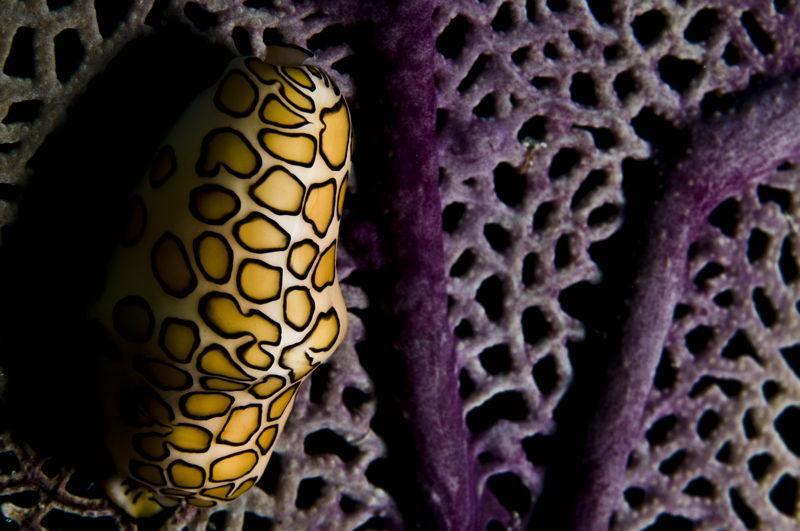أغرب 7 مخلوقات مخيفة في قاع المحيط 13983354251.jpg