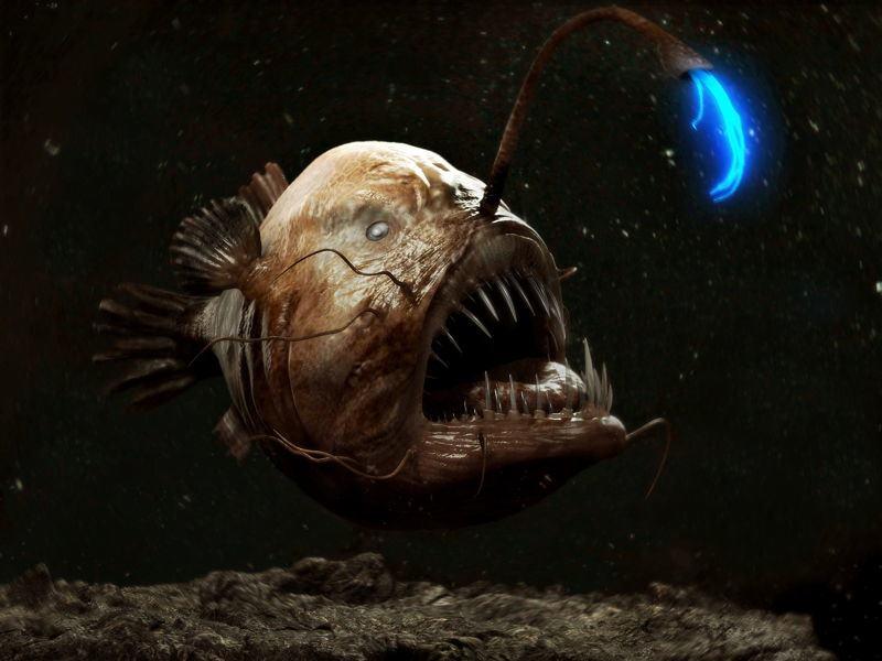أغرب 7 مخلوقات مخيفة في قاع المحيط 1398335709381.jpg