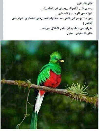 طائر فلسطين 1401997181151.jpg