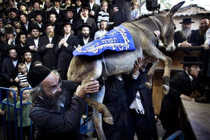 100 الف حمار تطلب استيرادها اسرائيل من مصر لسبب غريب جدا !! 1403862550351.jpg
