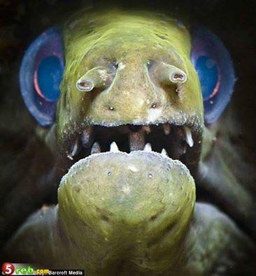 صورة مرعبة لسمكة موراي: 1403863601351.jpg