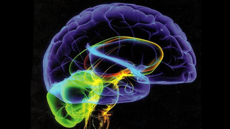 وأخيرا.. مفتاح المخّ البشري بيد العلماء 1404778928671.jpg