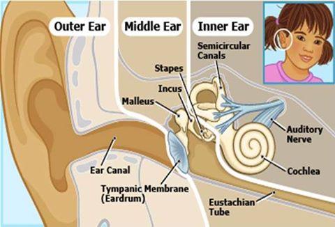 - سلسلة ( التهاب الأذن الوسطى عند الأطفال ) : 1407535715791.jpg
