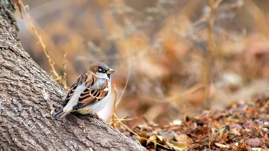 حيوانات تستمتع بأواخر الدفء قبل حلول الشتاء 1414049895971.jpg