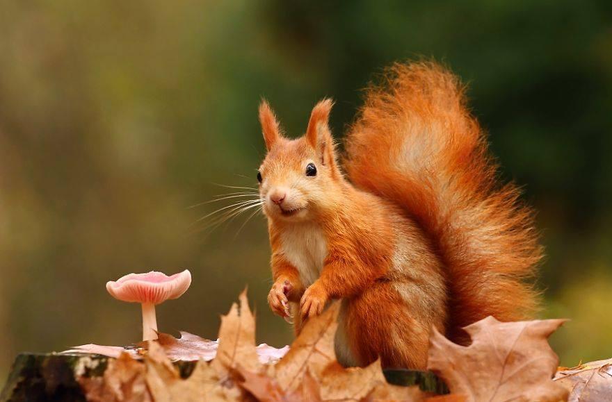 حيوانات تستمتع بأواخر الدفء قبل حلول الشتاء 1414050022031.jpg
