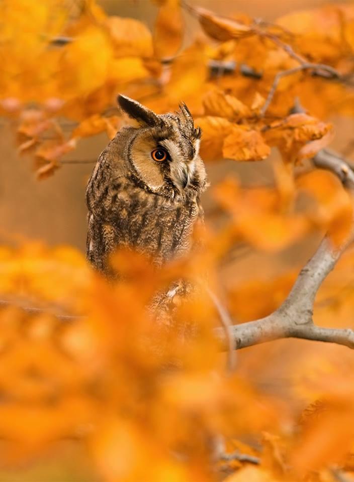 حيوانات تستمتع بأواخر الدفء قبل حلول الشتاء 1414050430521.jpg
