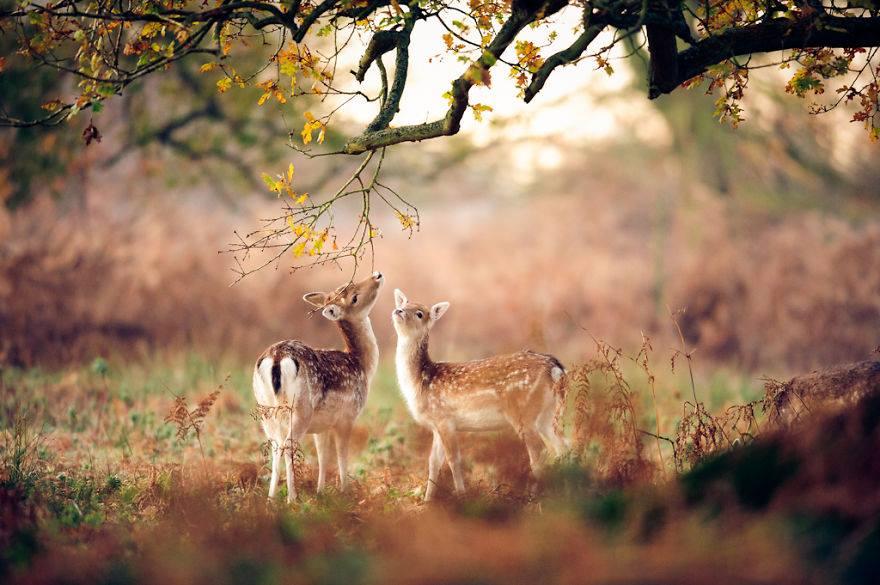 حيوانات تستمتع بأواخر الدفء قبل حلول الشتاء 1414050499451.jpg