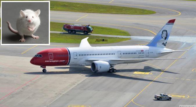فأر يؤخر رحلة طيران نرويجية لأكثر من 5 ساعات 1414661611091.jpg