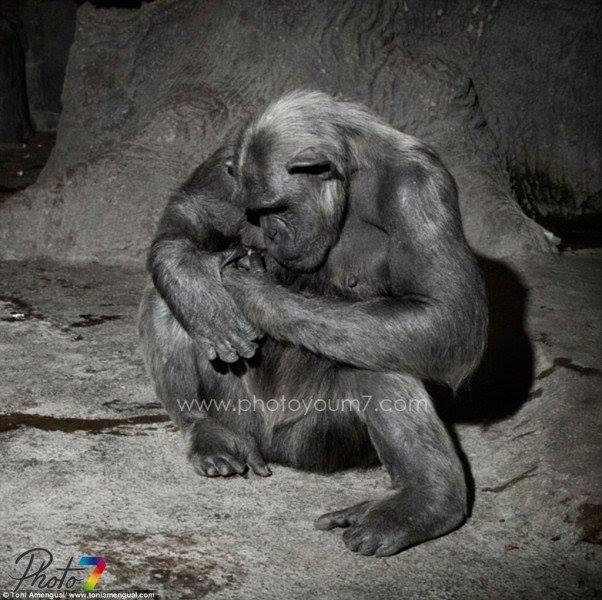 الحيوانات تصاب بالاكتئاب 1431375632121.jpg