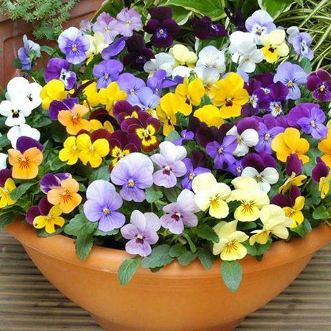 حدائق الزهرْ... في مدائح... خير البشرْ 143478243811.jpg