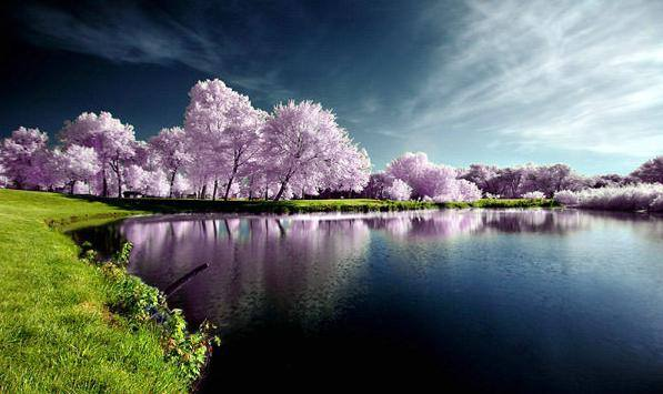 مجموعة من الصور الطبيعية التي تجلت فيها قدرة الخالق 1435416903133.jpg