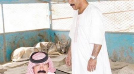 سعودي ستيني يربي 10 ذئاب في منزله 1439115732031.jpg