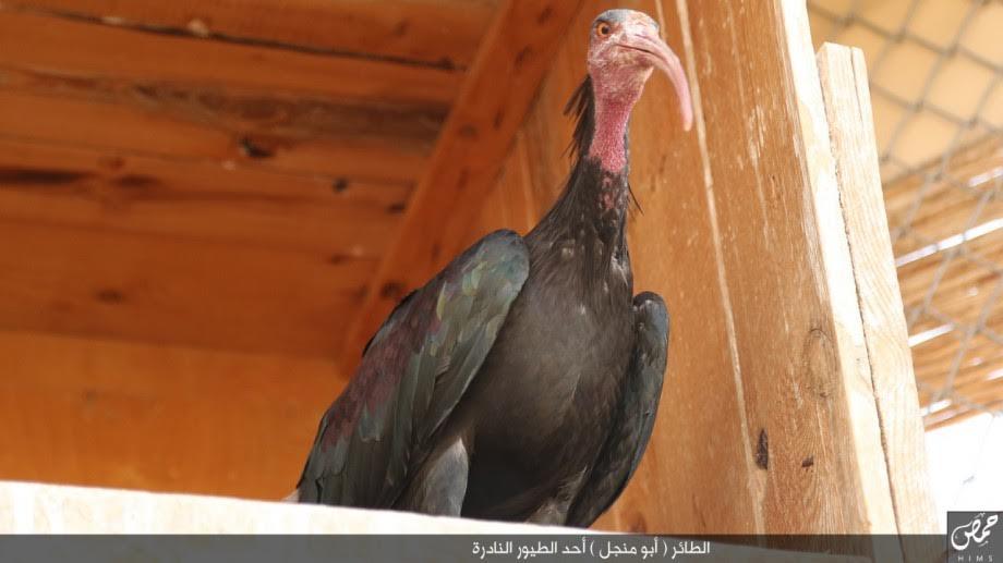 أسماء الأسد تستغيث لإنقاذ أبو منجل 143921450311.jpg