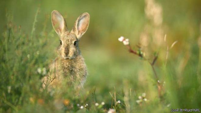 الأرانب: حقائق وخرافات, اشياء لا تصدق 1439366961691.jpg